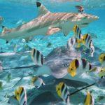 Bora-Bora-Marine-Life