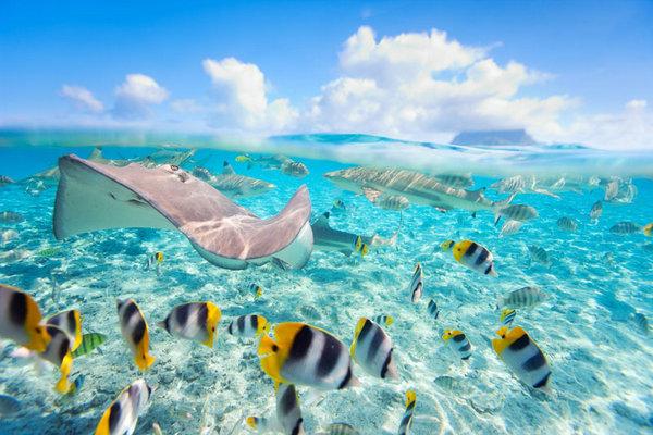 Sting-rays-Bora-Bora