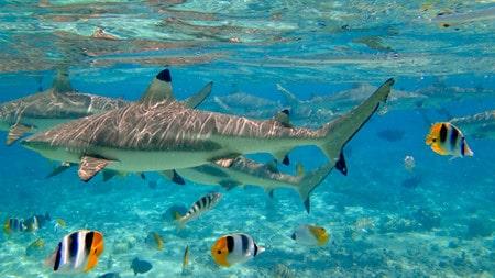bora-bora-snorkeling-2