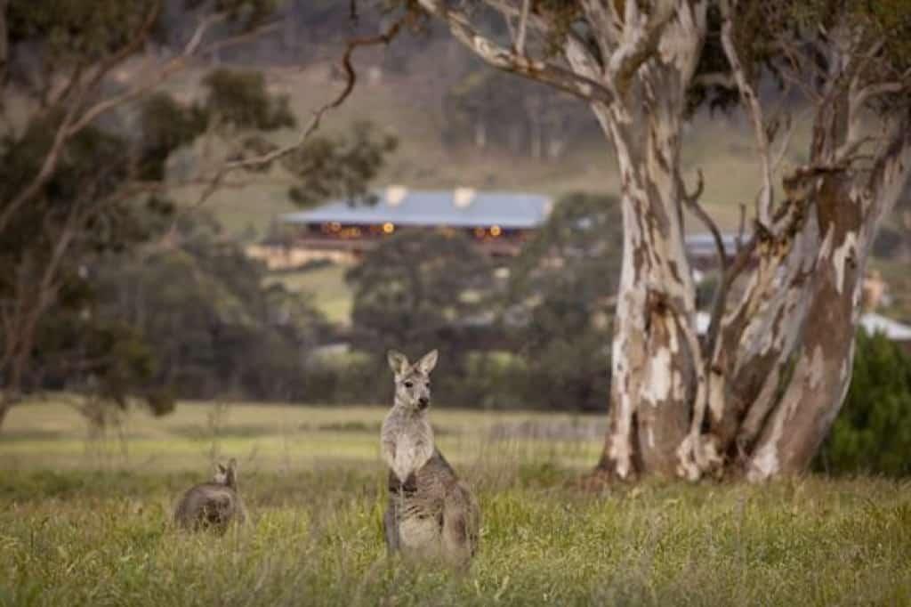 Emirates-Wolgan-Valley-Resort-Wildlife_1024