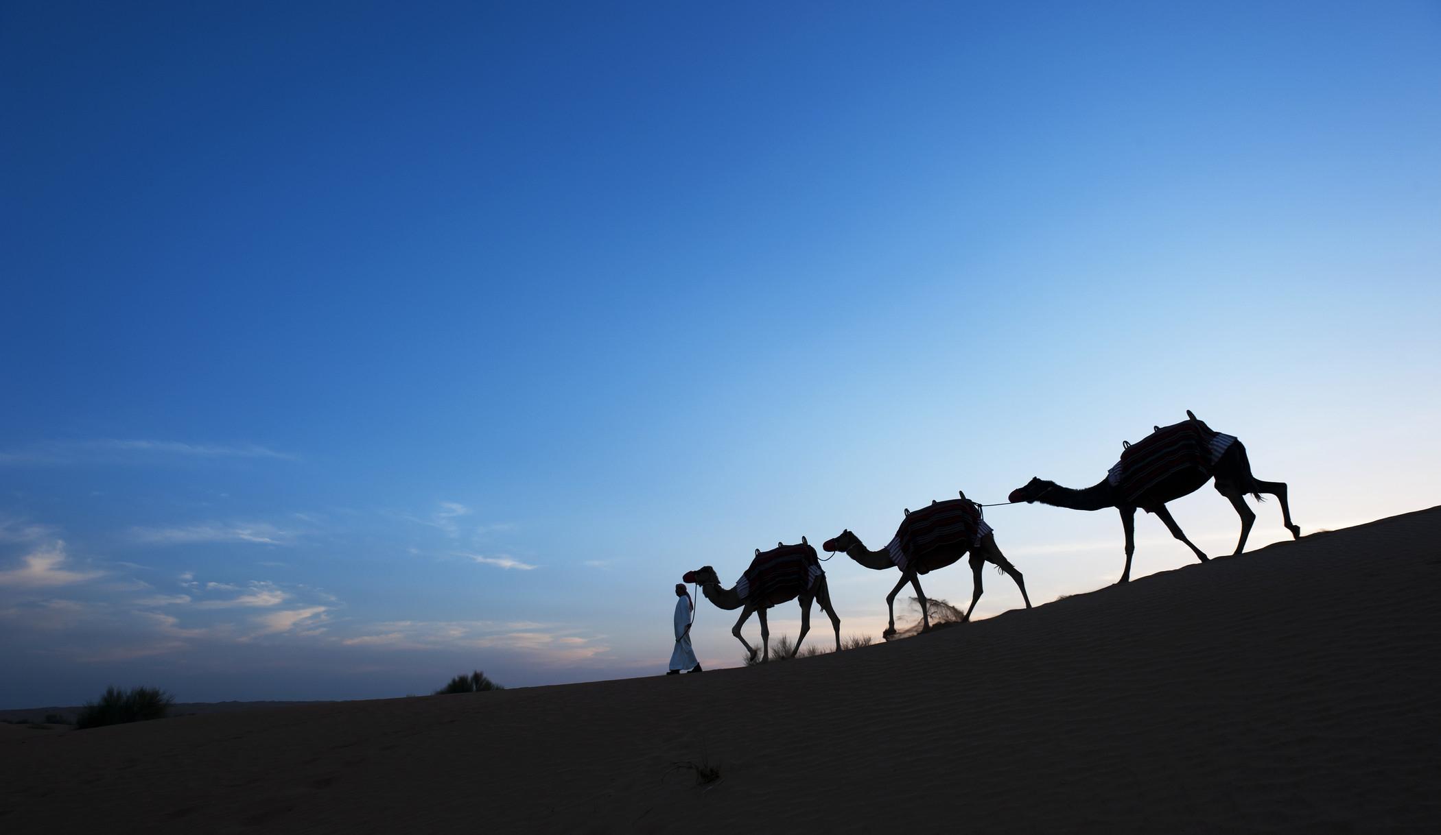 Al Maha-Camel trekking