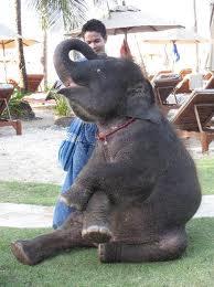 elephant-Khao-Lak