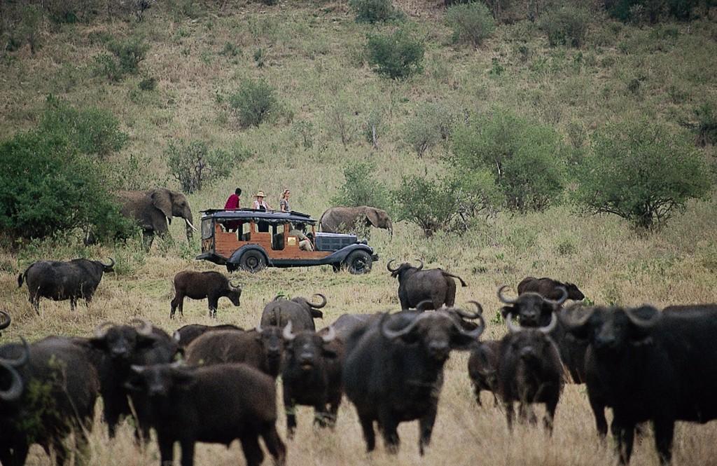 Cottar's - Buffalos