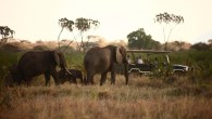 Joy's Camp - Game Drive - Elephants
