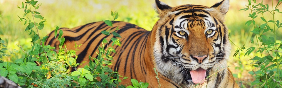 wildlife-india