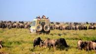 Safari in Serengeti, Tanzania