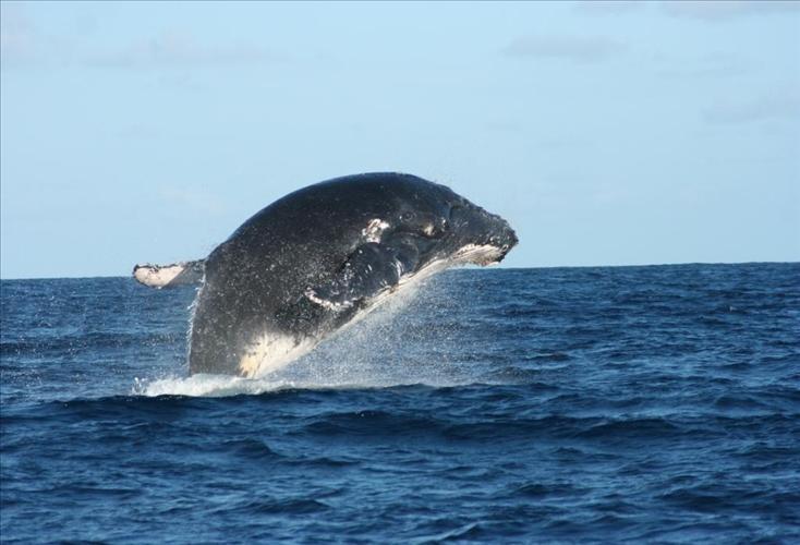 whale-vamizi-island