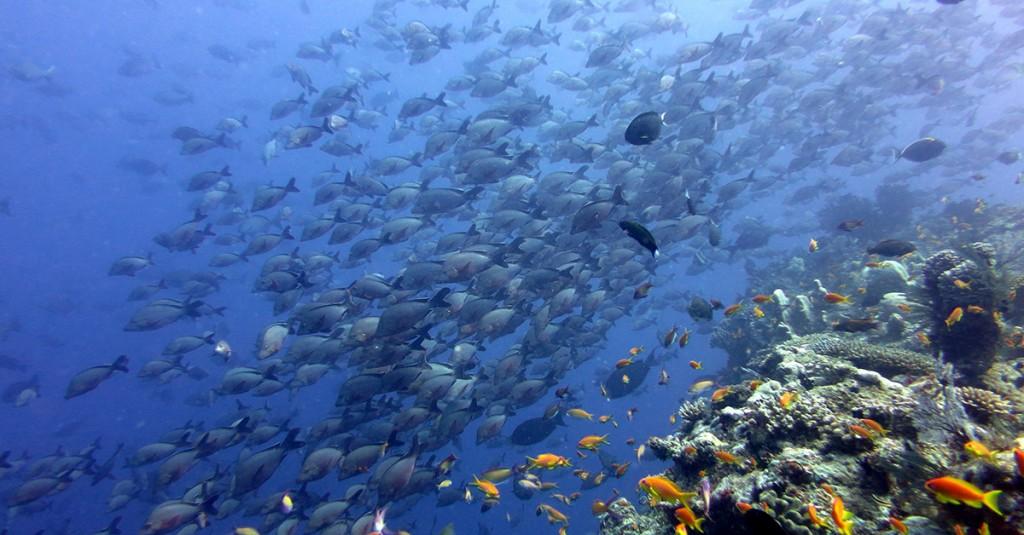 indigo-lodges-underwater