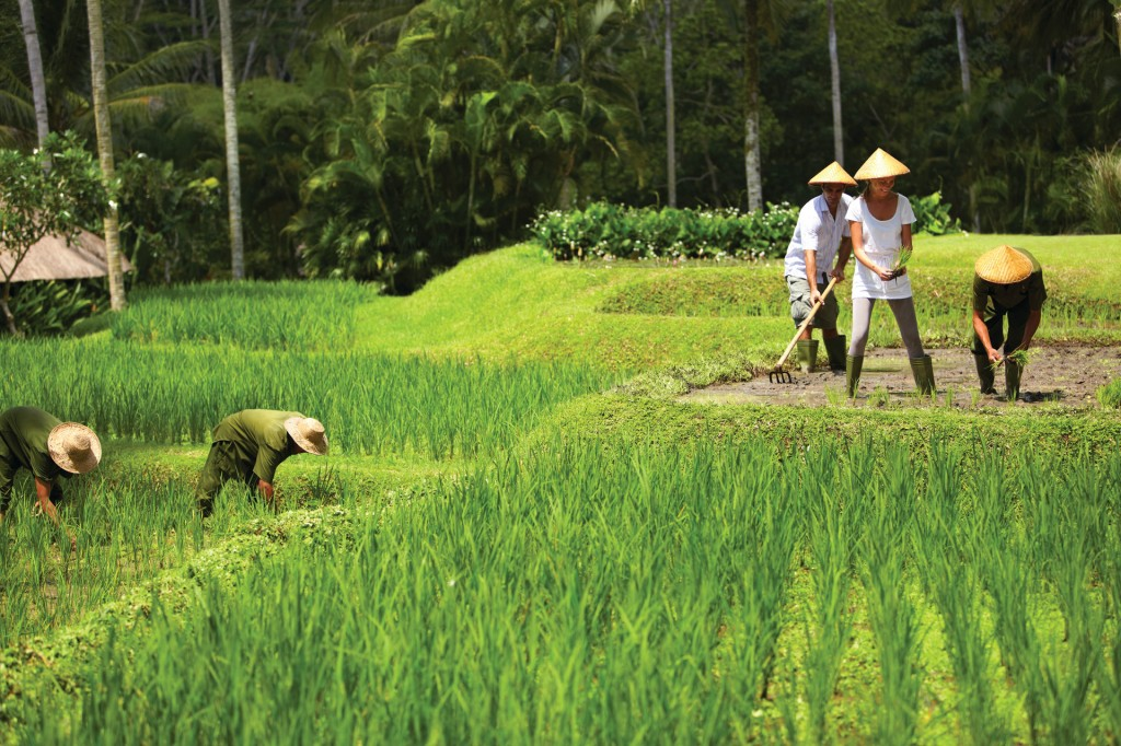 Balinese Farmer Experience, Four Seasons Sayan, Bali
