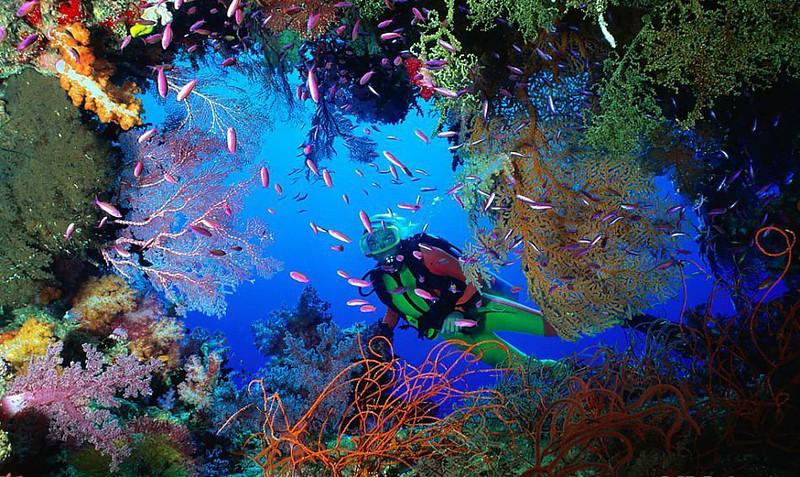 JMC-diving-coral