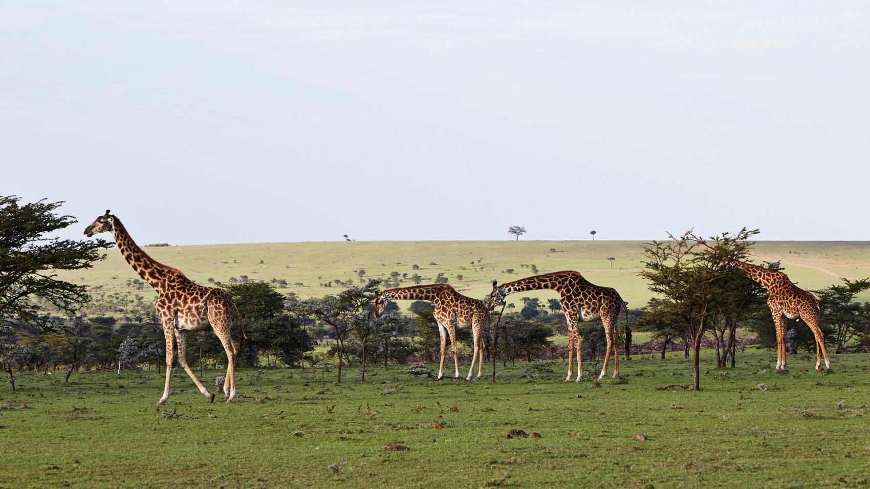 -Olare-Mara-Kempinski-Masai-Mara