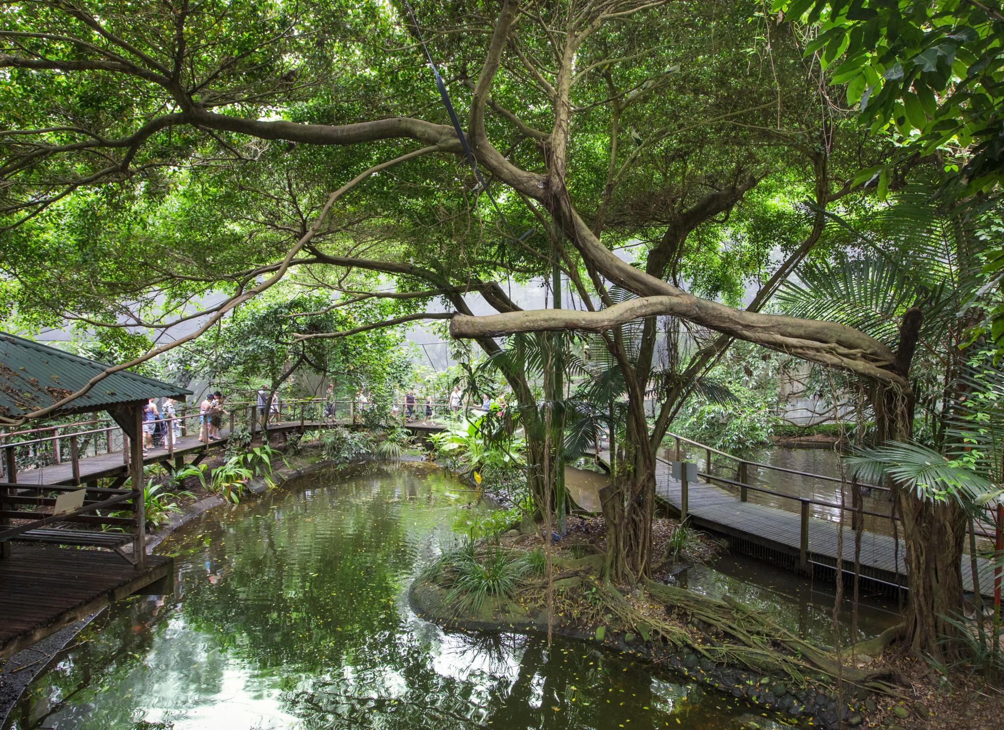 Rainforest 1_3362-2