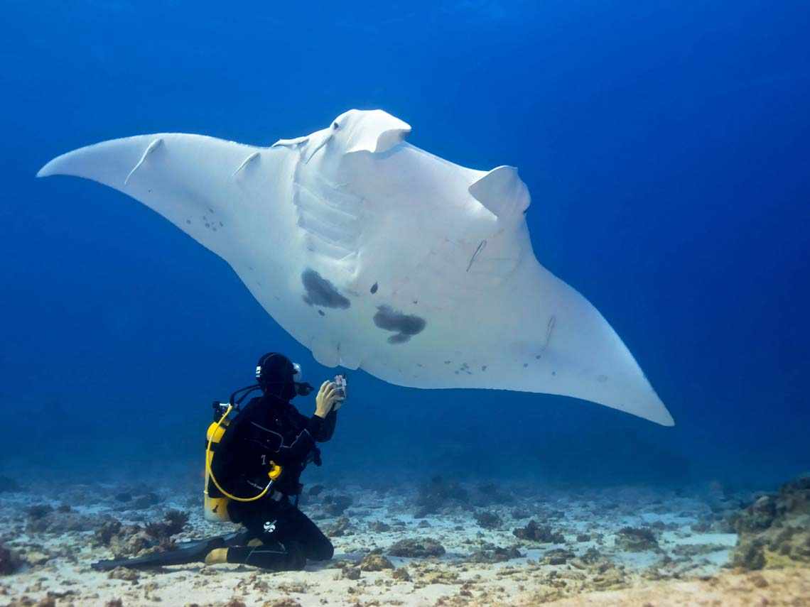 Swim with the magnificent Manta Rays