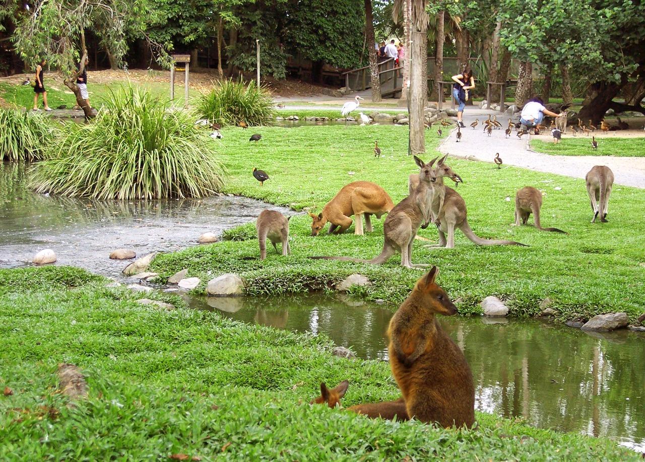 kangaroos-wildlife-habitat