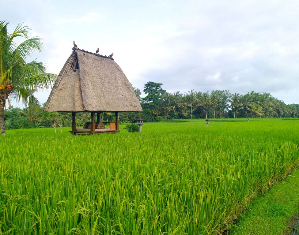 chedi-rice-fields
