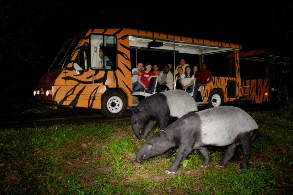 p-night-safari-singapore-singapore-attractions-parks-attractions-sightseeing-zoos-630141_54_990x660_201405311538